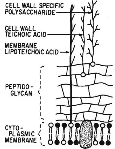 Dr. Tritz: Bacteria