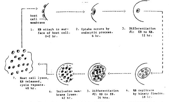 baclofen pregabalin ghb